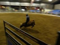 bull riding Australia