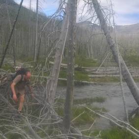 river crossings by downed trees