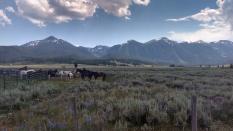 classic montana