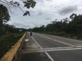 plantation roadside